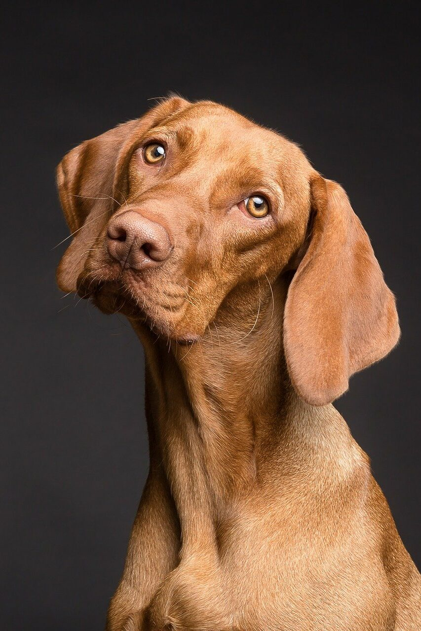 Tierfotoshooting ein Hund schaut skeptisch in die Kamera