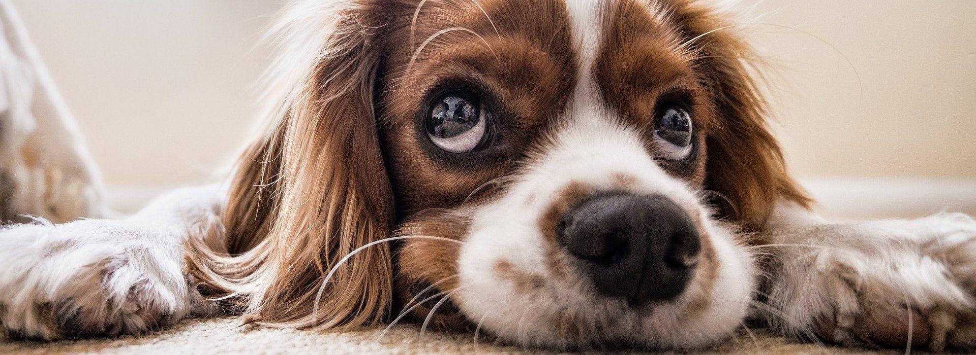 Ein Tierfoto eines Hundes, der in die Kamera blickt